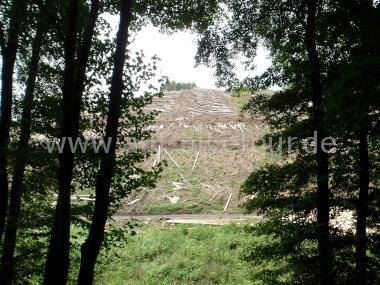 Forst bei Werthenbach
