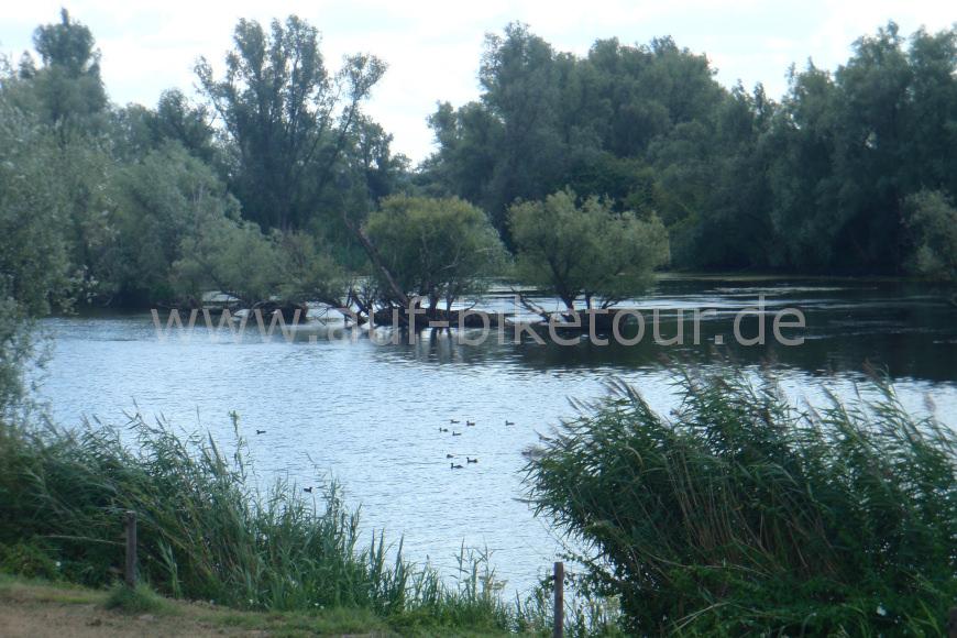 Natur am Rheinradweg