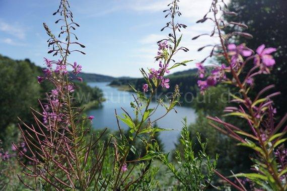 Flora an der Dhünntalsperre